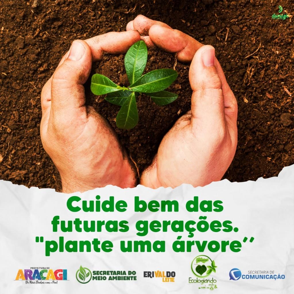 """Araçagi recebe 3 mil mudas de árvores para projeto de arborização do Município """"Plante uma árvore"""""""