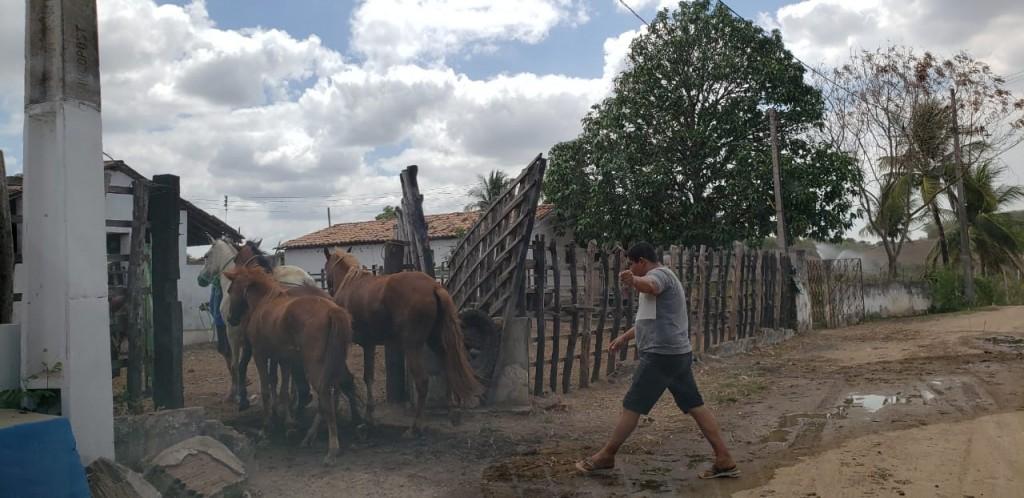 Secretaria de Meio Ambiente inicia captura de animais soltos em vias públicas de Araçagi